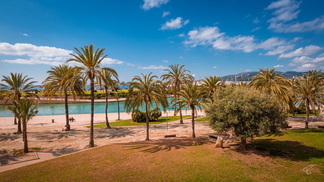 Palma de Mallorca Parc de la Mar palm trees