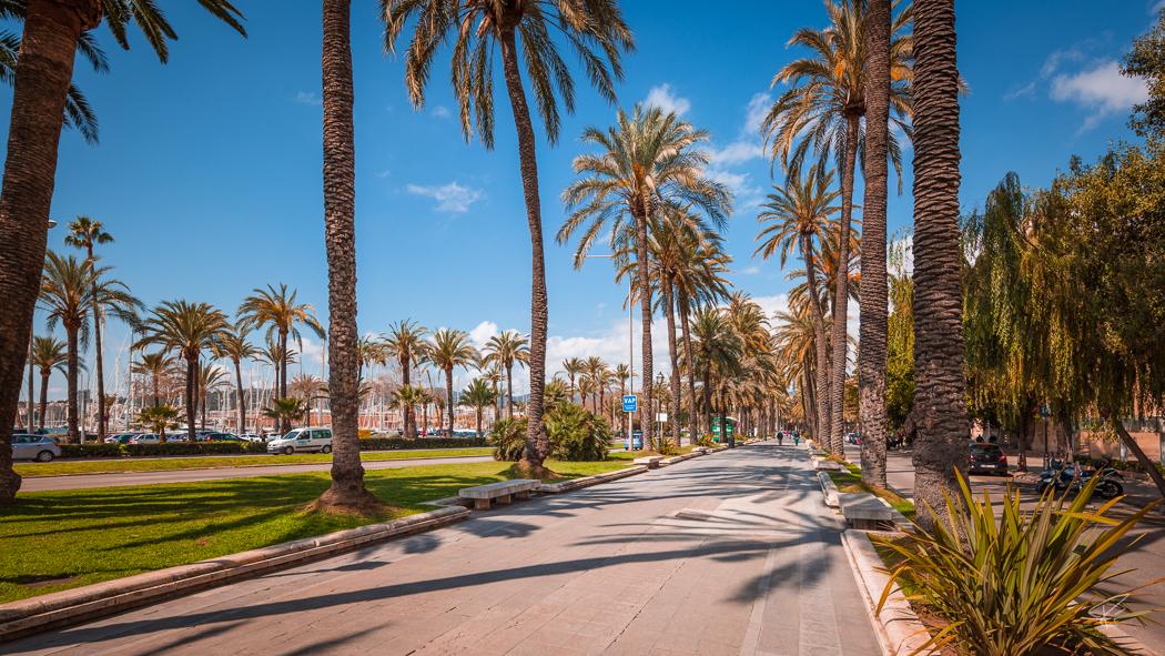 Palma de Mallorca palm trees