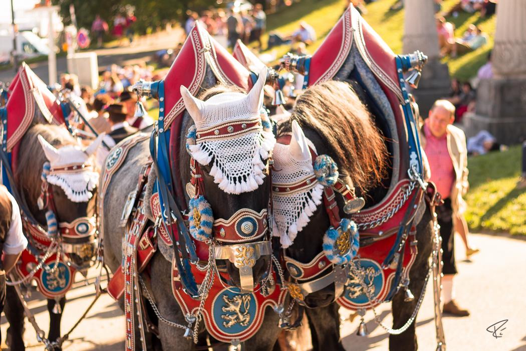 Oktoberfest Wiesn Munich Pferde Kutsche horses